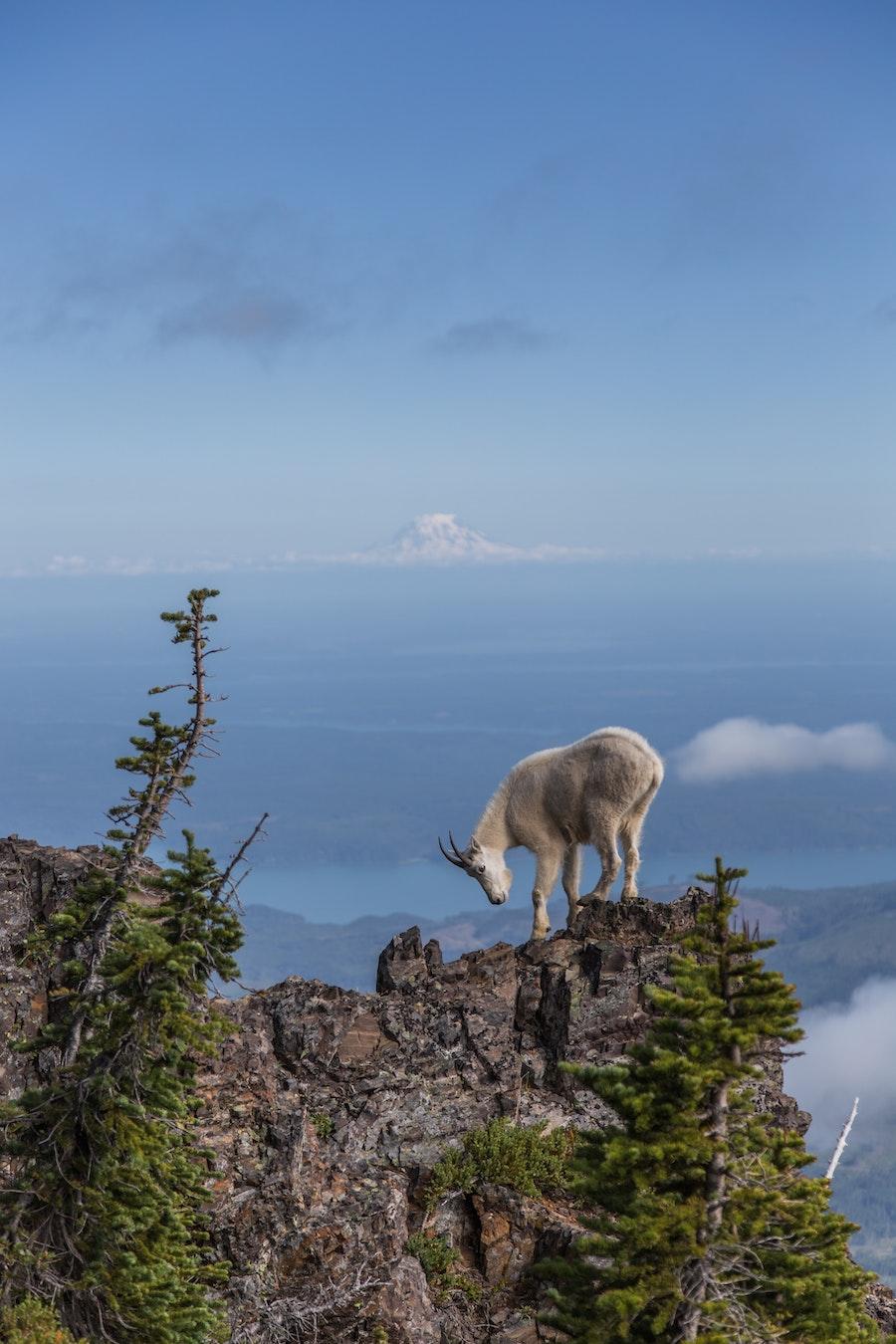 Summit of Mt. Ellinor