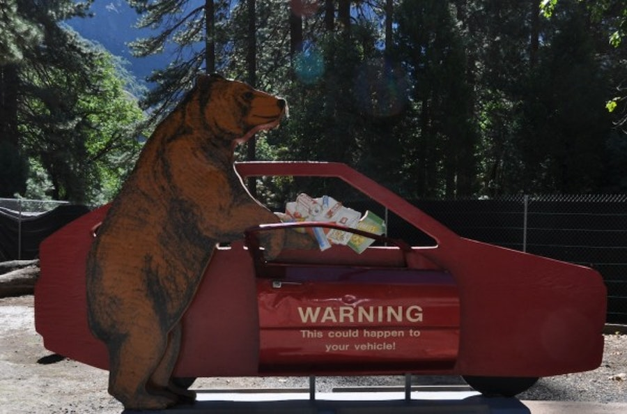 Can You Leave Food In A Car Near Bears