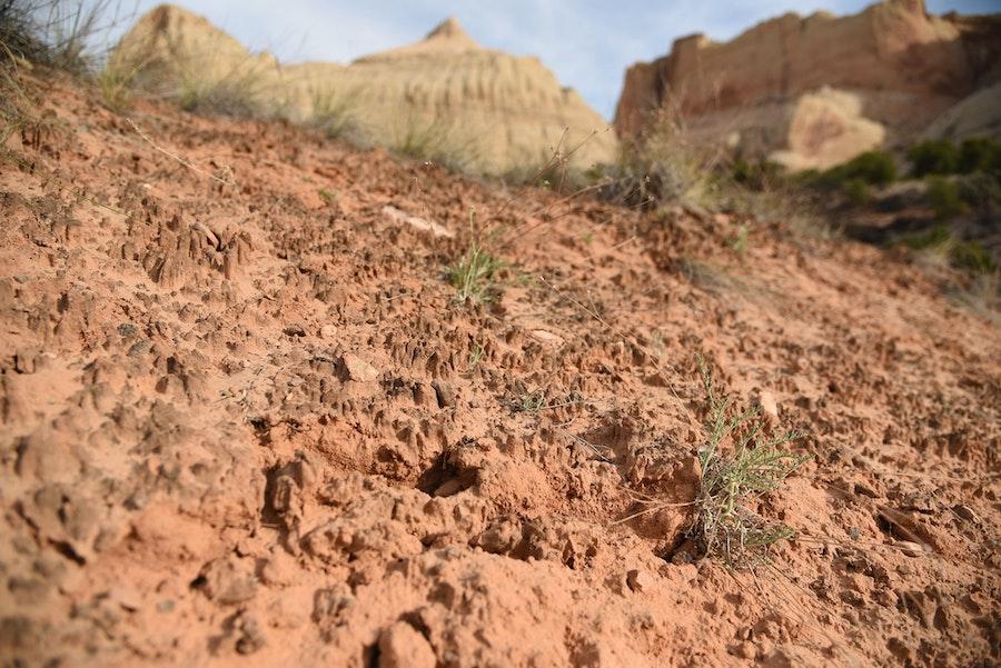Cyanobacteria soil